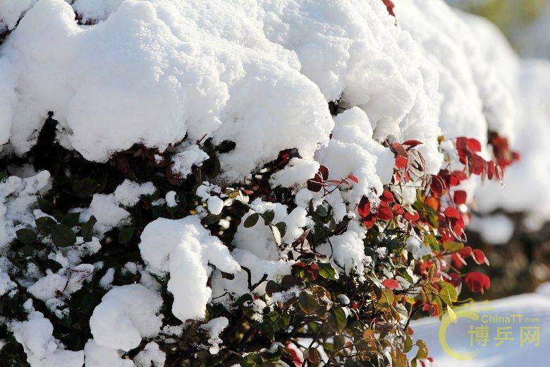 雪霁--江南今年第一场雪 - 铜陵分站官方服务区