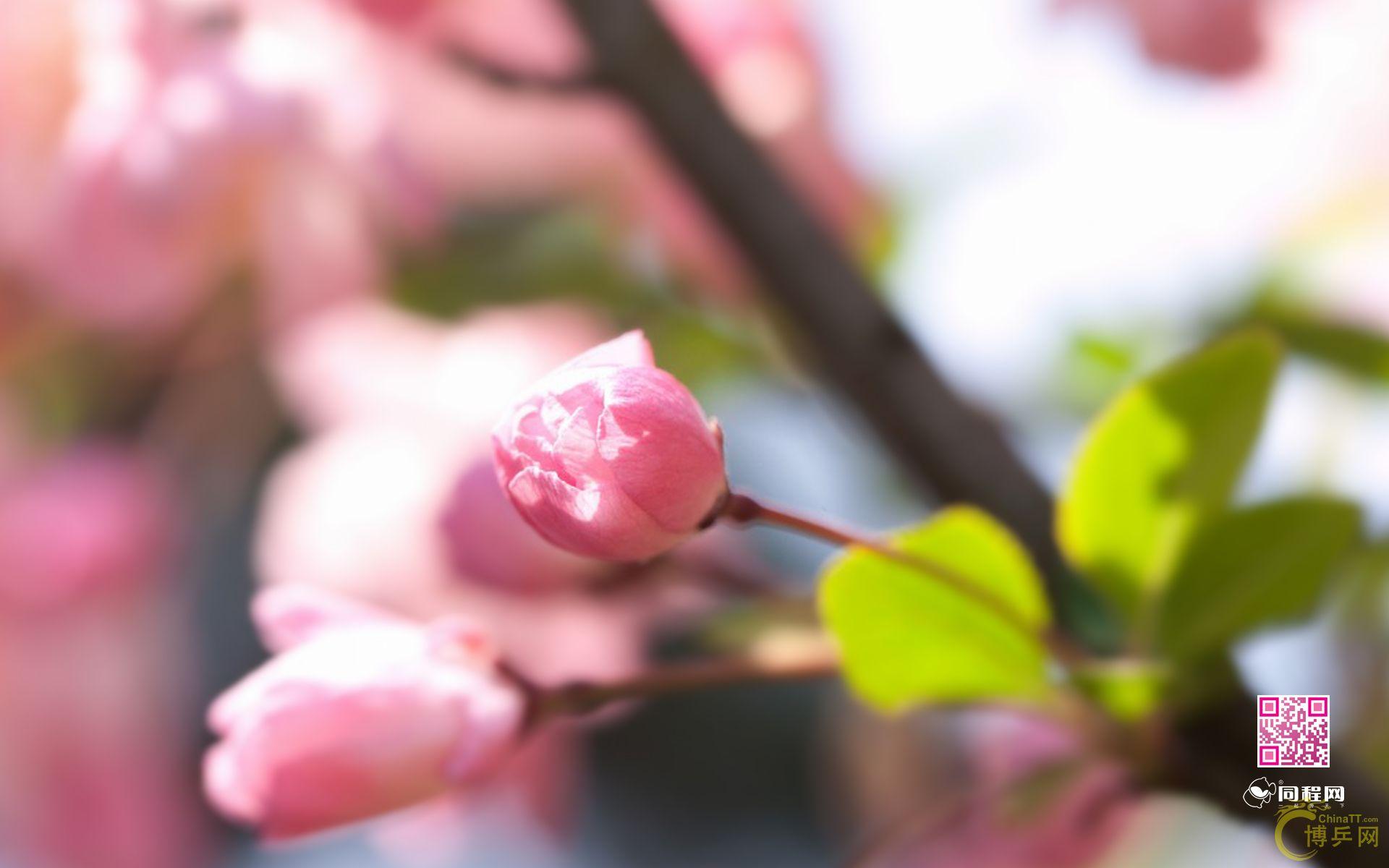 春天动态问候语