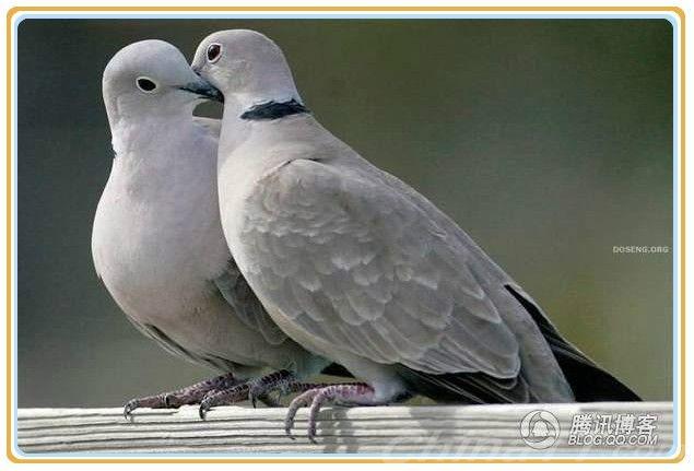 【分享图片】动物的爱